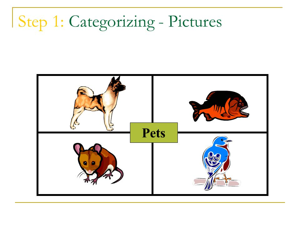 Step 1: Categorizing - Pictures Pets