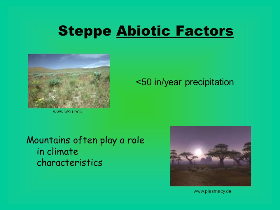 Steppe Abiotic Factors www.plasmacy.de www.wsu.edu <50 in/year precipitation Mountains often play a role in climate characteristics