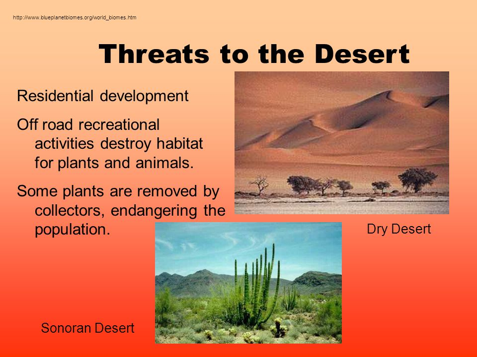 Threats to the Desert Residential development Off road recreational activities destroy habitat for plants and animals.
