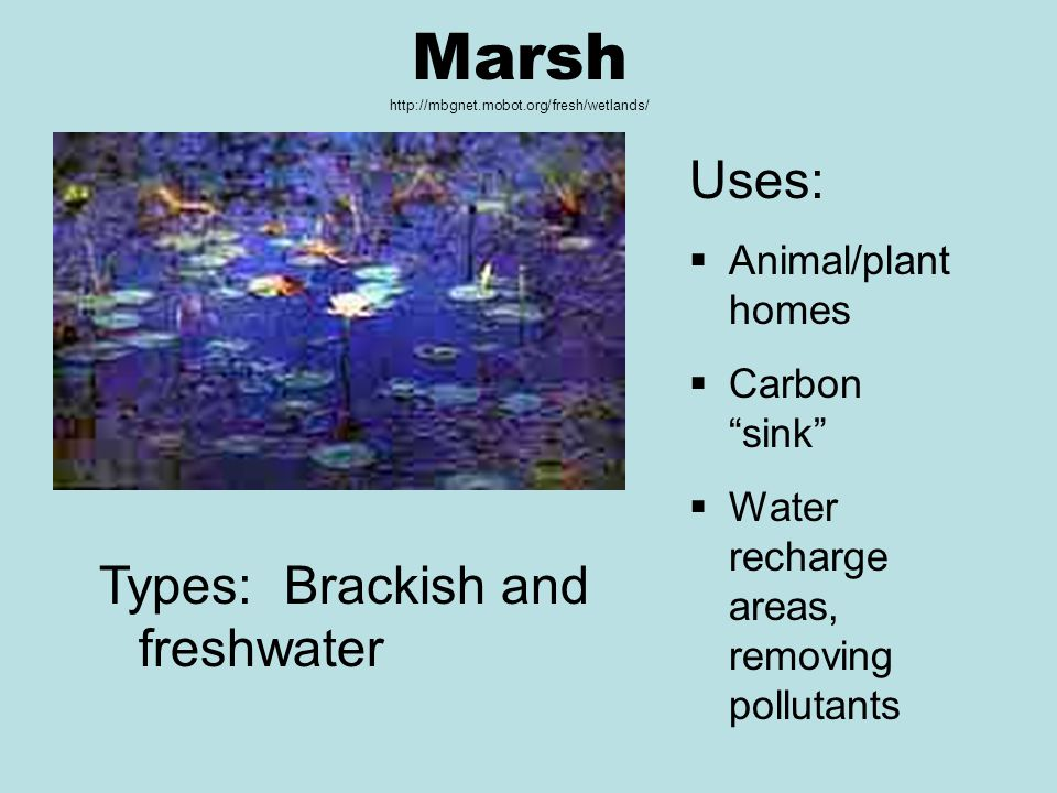 Marsh http://mbgnet.mobot.org/fresh/wetlands/ Uses:  Animal/plant homes  Carbon sink  Water recharge areas, removing pollutants Types: Brackish and freshwater