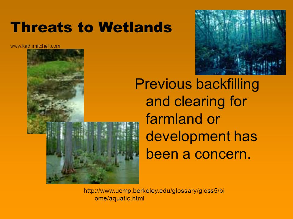 Threats to Wetlands Previous backfilling and clearing for farmland or development has been a concern.