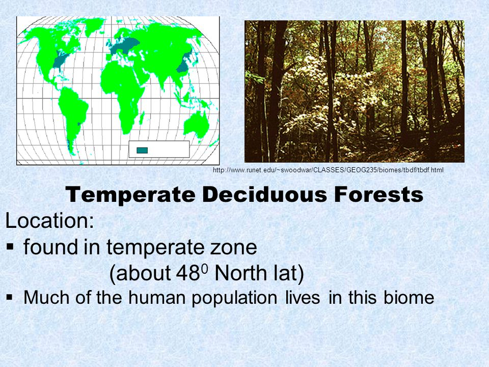 Temperate Deciduous Forests Location:  found in temperate zone (about 48 0 North lat)  Much of the human population lives in this biome http://www.runet.edu/~swoodwar/CLASSES/GEOG235/biomes/tbdf/tbdf.html