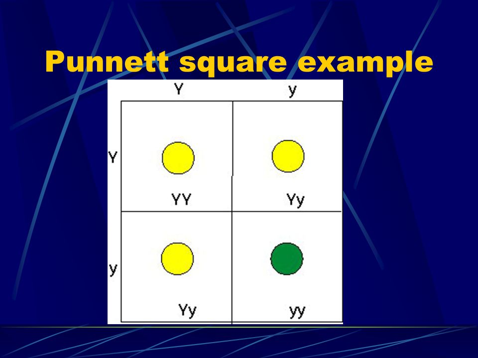 Reading Punnett squares Gametes are placed above and to the left of the square Offspring are placed in the square. Capital letters (Y) represent domin