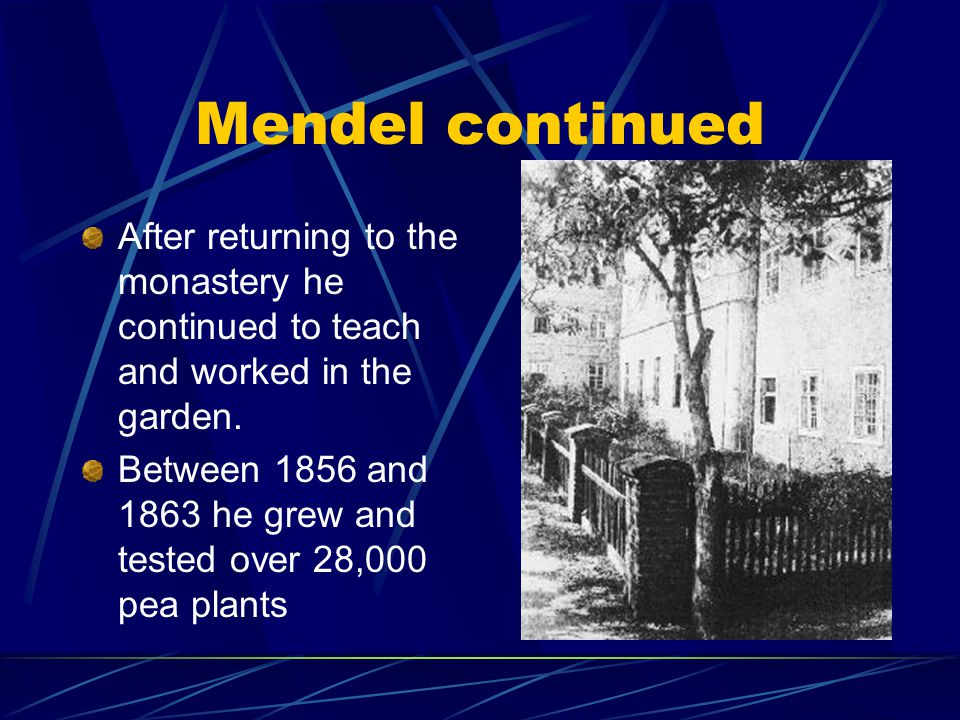 Gregor Mendel Born in 1822 in Czechoslovakia. Became a monk at a monastery in 1843. Taught biology and had interests in statistics. Also studied at th