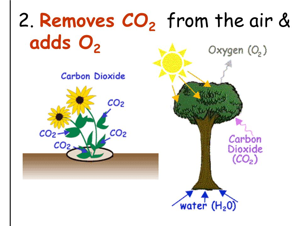 2. Removes CO 2 from the air & adds O 2