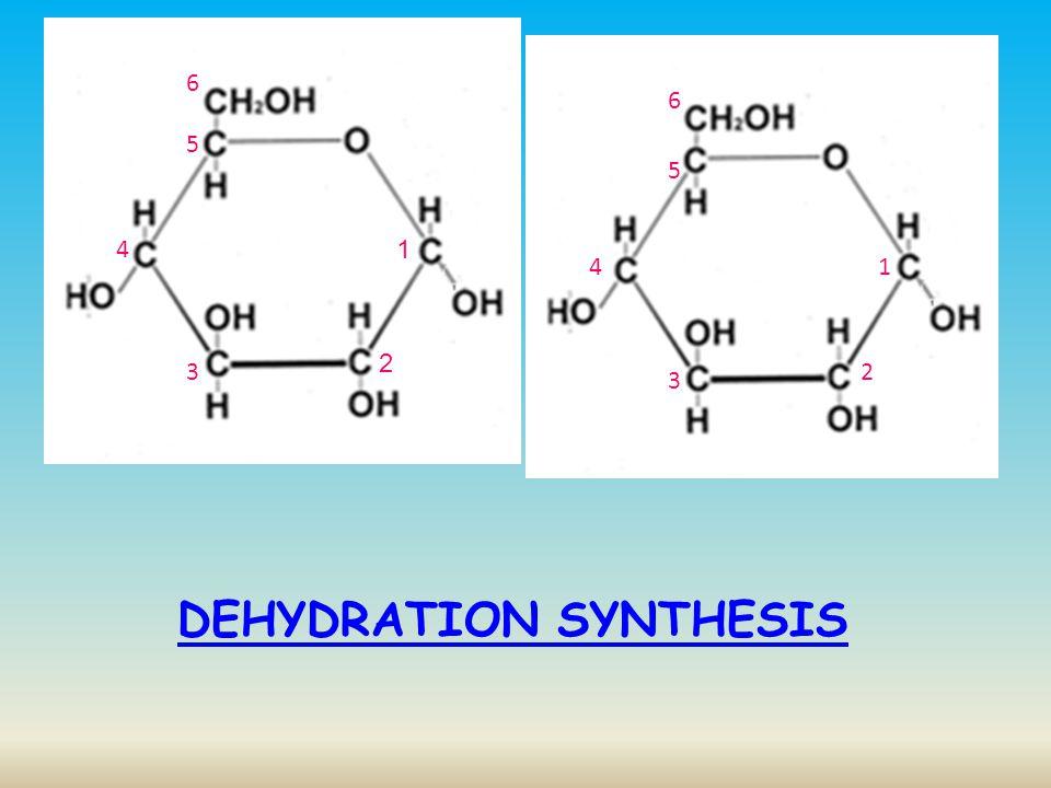 1 2 3 4 5 6 2 1 3 4 5 6 α 1,4 glycosidic linkage This could be the start of which polysaccharides.
