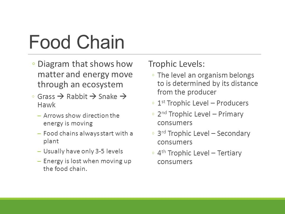 Food Chain ◦Diagram that shows how matter and energy move through an ecosystem ◦Grass  Rabbit  Snake  Hawk ─Arrows show direction the energy is mov