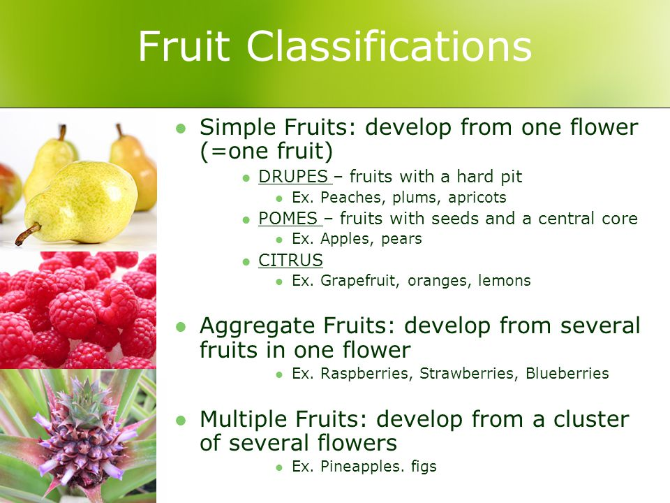 Fruit Classifications Simple Fruits: develop from one flower (=one fruit) DRUPES – fruits with a hard pit Ex.