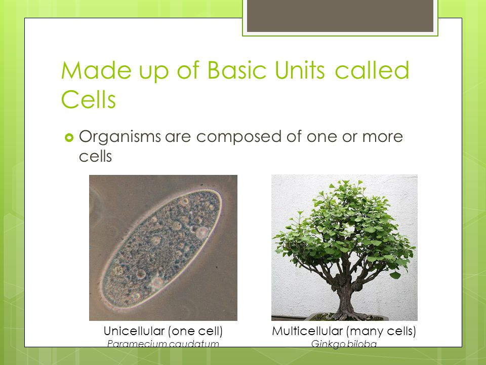 Made up of Basic Units called Cells  Organisms are composed of one or more cells Unicellular (one cell) Paramecium caudatum Multicellular (many cells