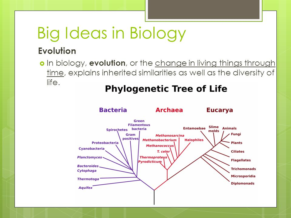 Copyright Pearson Prentice Hall Big Ideas in Biology Evolution  In biology, evolution, or the change in living things through time, explains inherite