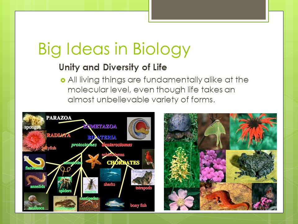 Copyright Pearson Prentice Hall Big Ideas in Biology Unity and Diversity of Life  All living things are fundamentally alike at the molecular level, e