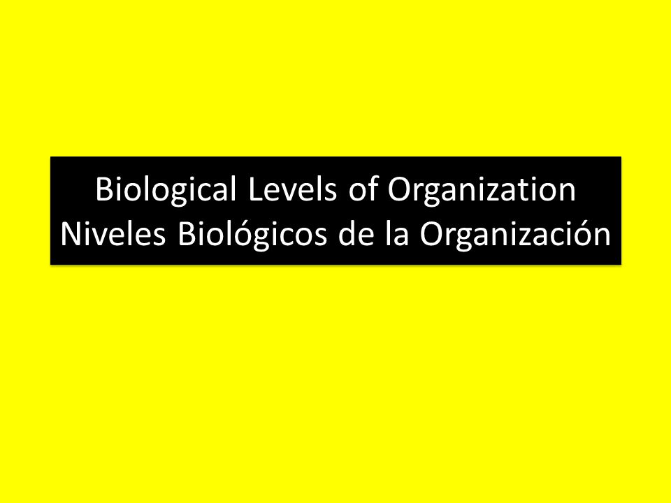 Biological Levels of Organization Niveles Biológicos de la Organización