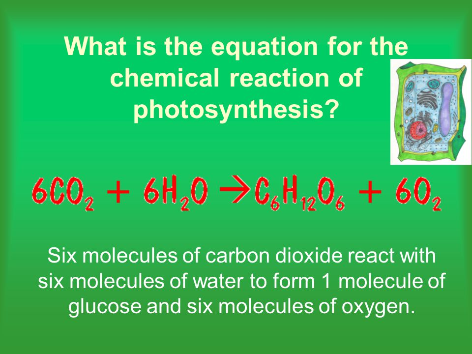 What is the equation for the chemical reaction of photosynthesis.
