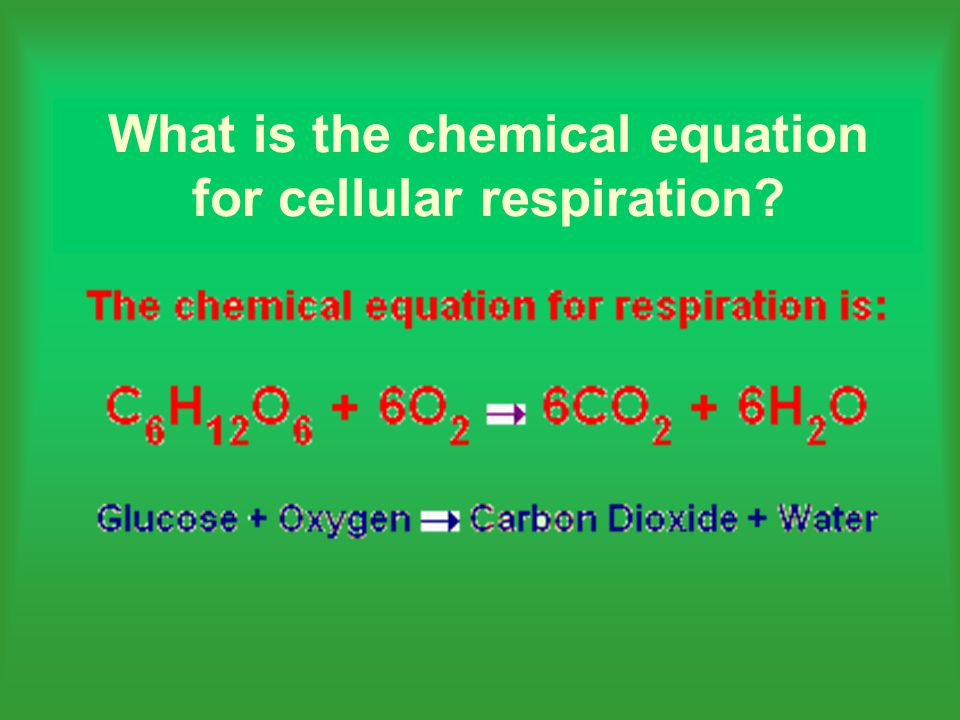 What is the chemical equation for cellular respiration?