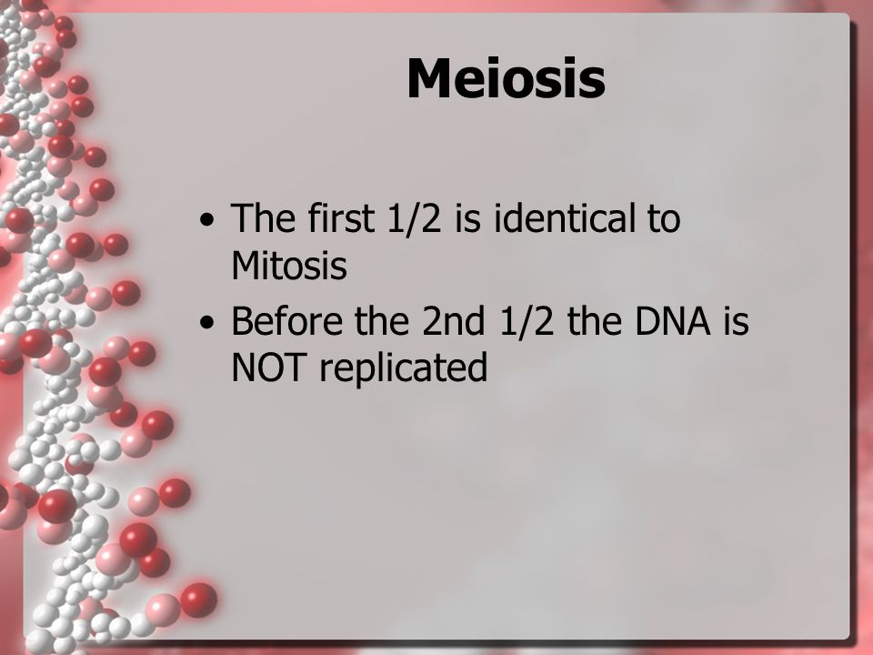 Meiosis The first 1/2 is identical to Mitosis Before the 2nd 1/2 the DNA is NOT replicated