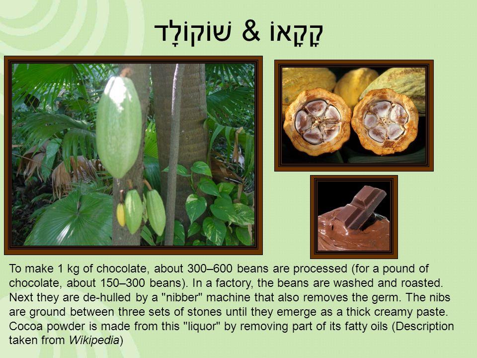 קָקָאוֹ &שׁוֹקוֹלָד To make 1 kg of chocolate, about 300–600 beans are processed (for a pound of chocolate, about 150–300 beans). In a factory, the be