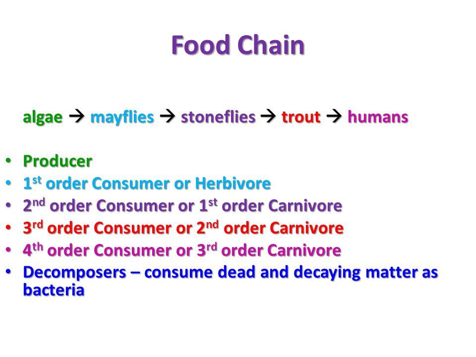 Food Chain – Terrestrial vs. Marine