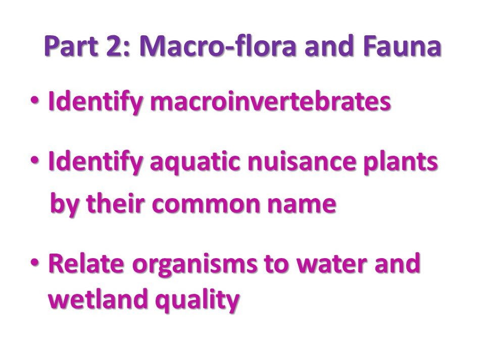 Indicator Species FOR Division C ONLY students will also be expected to know the general ecology, life cycles, and feeding habitats of all listed organisms Class 1-pollution sensitive Class 2-moderately sen.