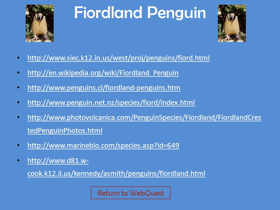 Fiordland Penguin http://www.siec.k12.in.us/west/proj/penguins/fiord.html http://en.wikipedia.org/wiki/Fiordland_Penguin http://www.penguins.cl/fiordland-penguins.htm http://www.penguin.net.nz/species/fiord/index.html http://www.photovolcanica.com/PenguinSpecies/Fiordland/FiordlandCres tedPenguinPhotos.html http://www.photovolcanica.com/PenguinSpecies/Fiordland/FiordlandCres tedPenguinPhotos.html http://www.marinebio.com/species.asp?id=649 http://www.d81.w- cook.k12.il.us/kennedy/asmith/penguins/fiordland.html http://www.d81.w- cook.k12.il.us/kennedy/asmith/penguins/fiordland.html Return to WebQuest
