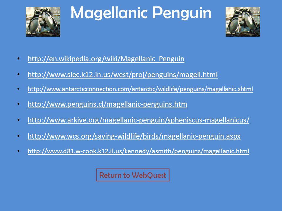 Magellanic Penguin http://en.wikipedia.org/wiki/Magellanic_Penguin http://www.siec.k12.in.us/west/proj/penguins/magell.html http://www.antarcticconnection.com/antarctic/wildlife/penguins/magellanic.shtml http://www.penguins.cl/magellanic-penguins.htm http://www.arkive.org/magellanic-penguin/spheniscus-magellanicus/ http://www.wcs.org/saving-wildlife/birds/magellanic-penguin.aspx http://www.d81.w-cook.k12.il.us/kennedy/asmith/penguins/magellanic.html Return to WebQuest