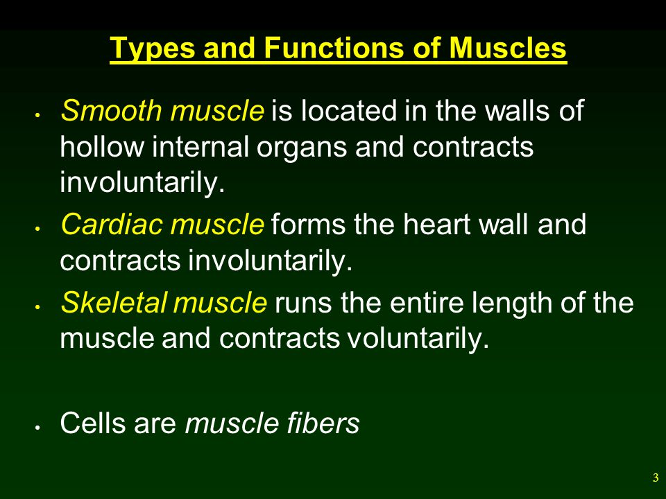24 Energy for Muscle Contraction ATP produced previous to strenuous exercise lasts a few seconds, and then muscles acquire new ATP in three ways.