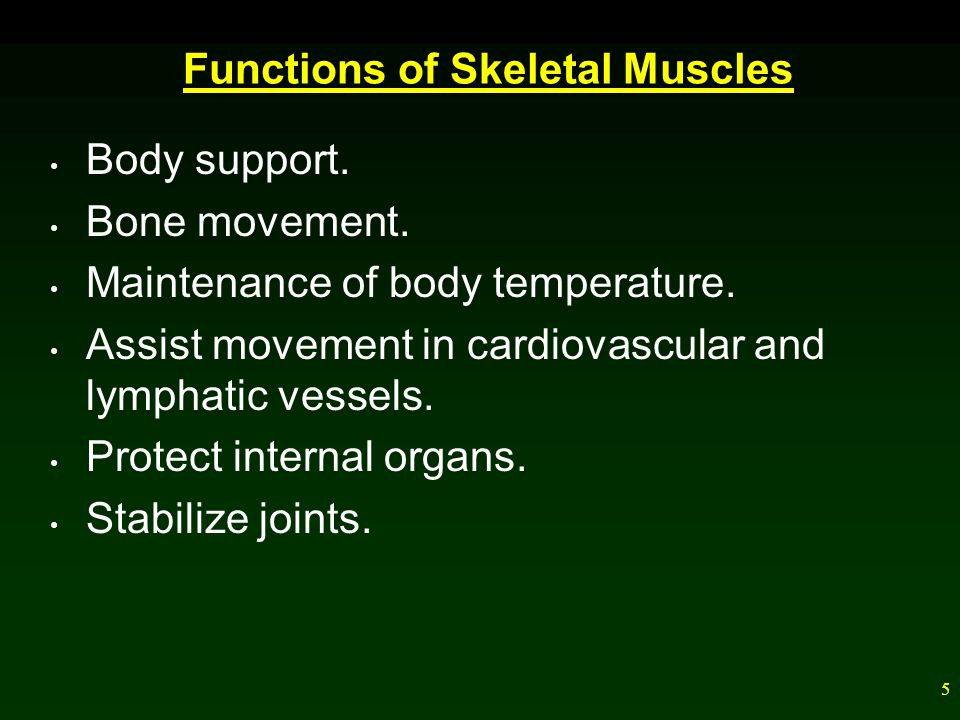 6 Skeletal Muscles of the Body A whole muscle contains bundles of skeletal muscle fibers, fascicles.