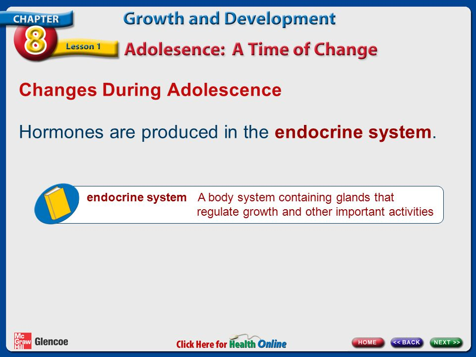 Changes During Adolescence Hormones are produced in the endocrine system. endocrine system A body system containing glands that regulate growth and ot