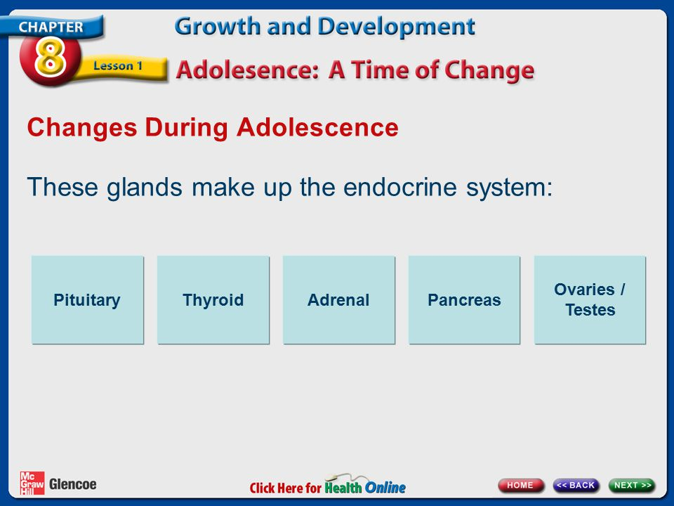 Changes During Adolescence These glands make up the endocrine system: PituitaryThyroidAdrenalPancreas Ovaries / Testes