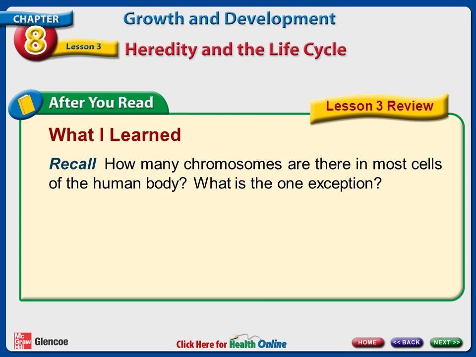 What I Learned Recall How many chromosomes are there in most cells of the human body? What is the one exception? Lesson 3 Review