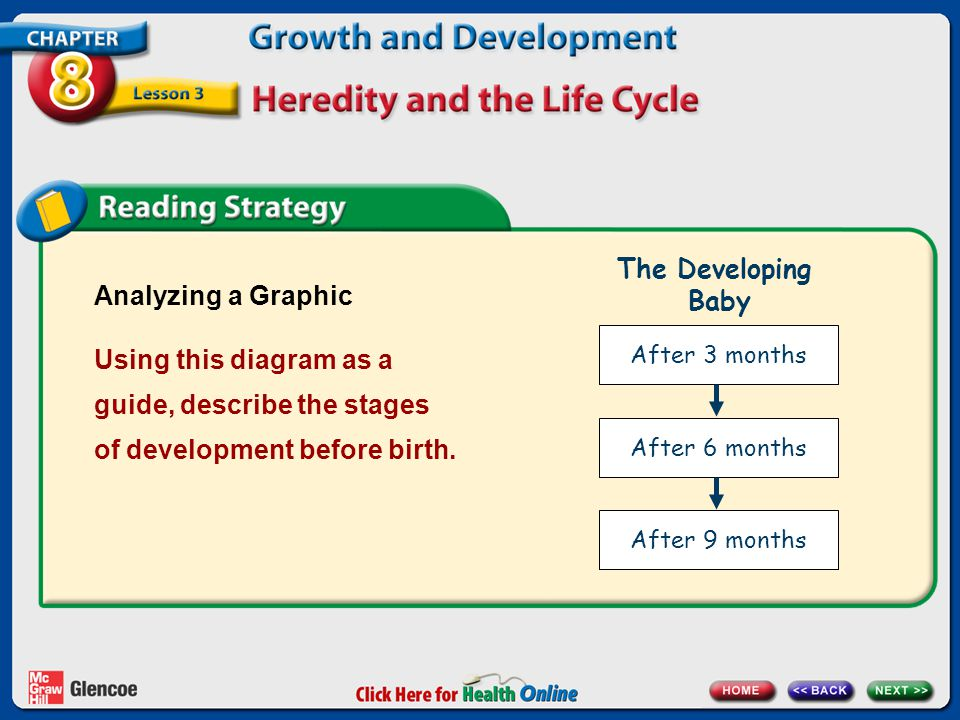 Analyzing a Graphic Using this diagram as a guide, describe the stages of development before birth. After 3 months After 6 months After 9 months The D