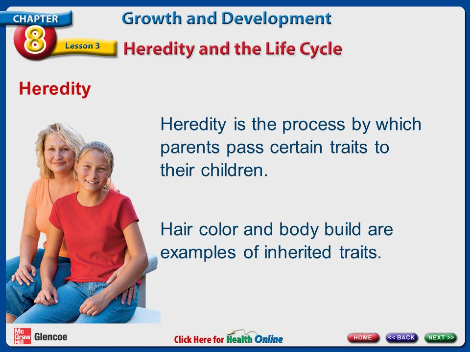 Heredity Heredity is the process by which parents pass certain traits to their children. Hair color and body build are examples of inherited traits.
