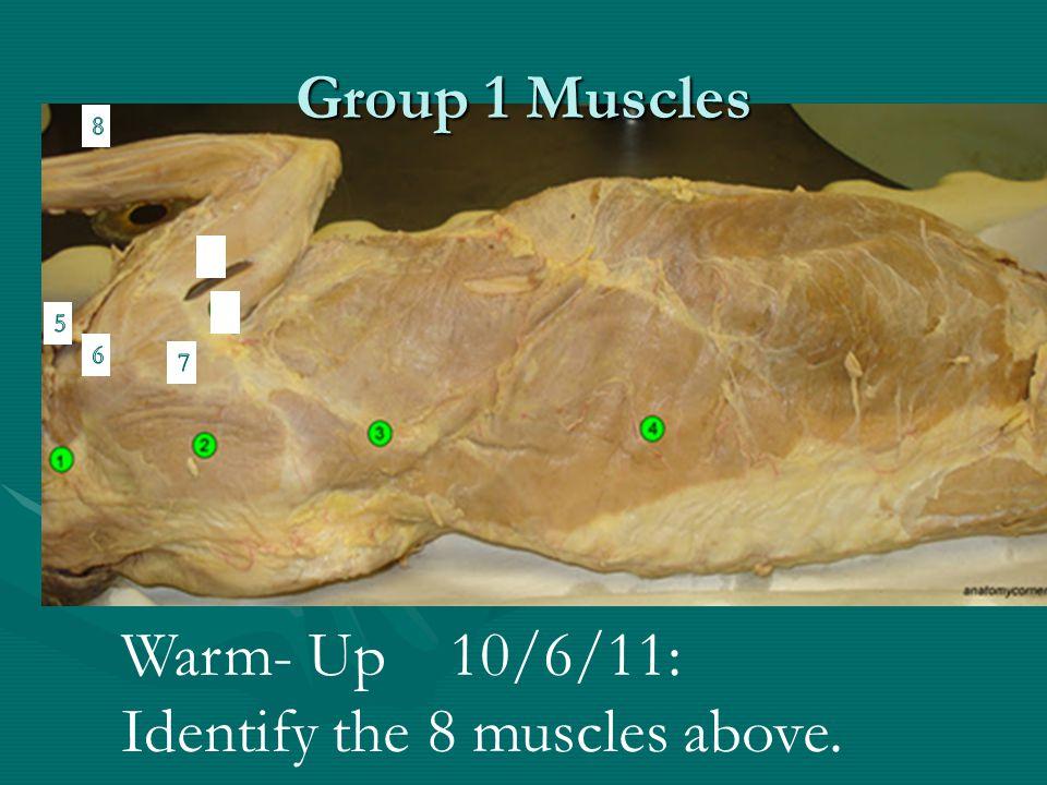 Trunk Muscles Figure 6.16