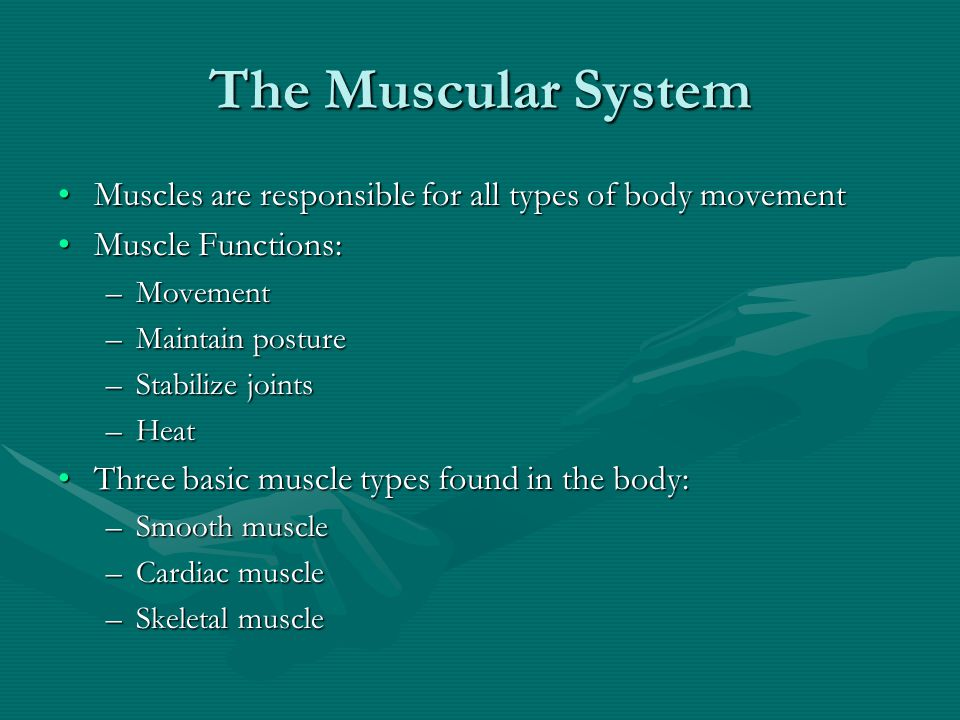 Muscle Fatigue and Oxygen Debt When a muscle is fatigued, it is unable to contractWhen a muscle is fatigued, it is unable to contract The common reason for muscle fatigue is oxygen debtThe common reason for muscle fatigue is oxygen debt –Oxygen must be returned to tissue to remove oxygen debt –Oxygen is required to get rid of accumulated lactic acid Increasing acidity (from lactic acid) and lack of ATP causes the muscle to contract lessIncreasing acidity (from lactic acid) and lack of ATP causes the muscle to contract less
