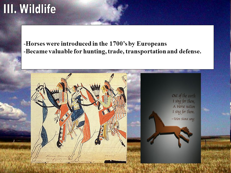 -Horses were introduced in the 1700's by Europeans -Became valuable for hunting, trade, transportation and defense.