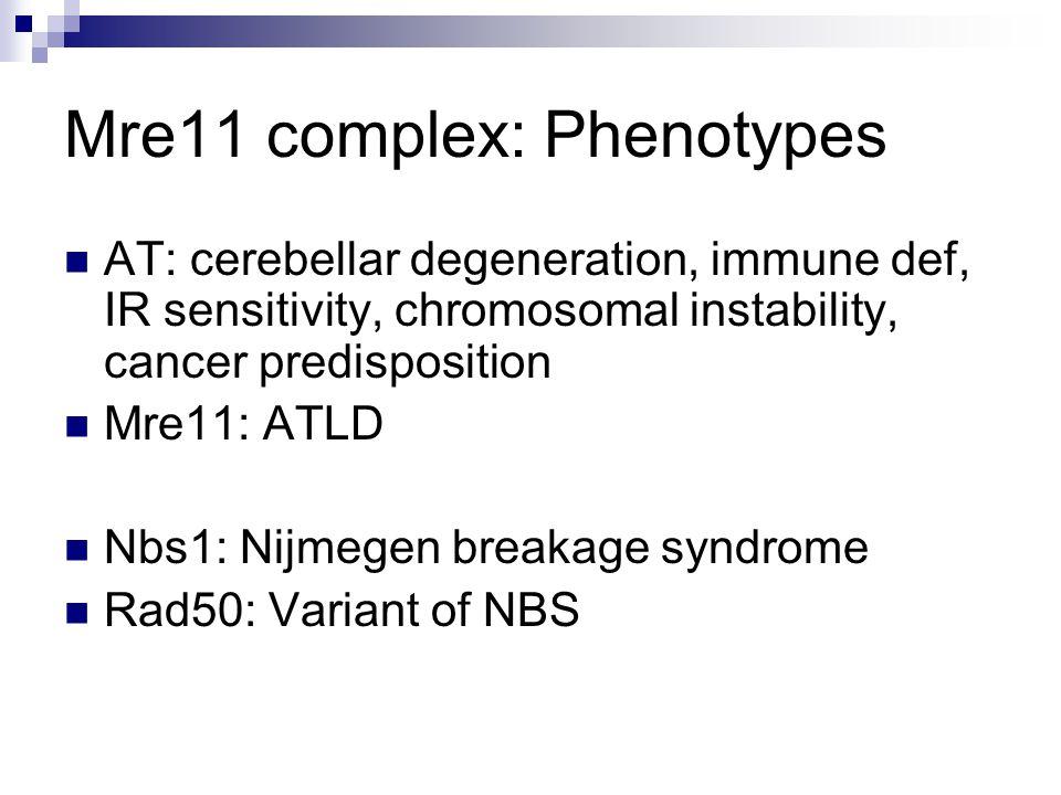 Mre11 complex: Phenotypes AT: cerebellar degeneration, immune def, IR sensitivity, chromosomal instability, cancer predisposition Mre11: ATLD Nbs1: Nijmegen breakage syndrome Rad50: Variant of NBS