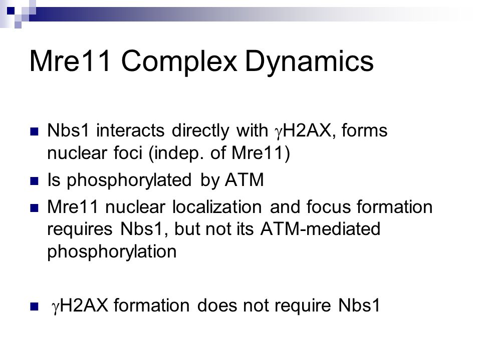Mre11 Complex Dynamics Nbs1 interacts directly with  H2AX, forms nuclear foci (indep.