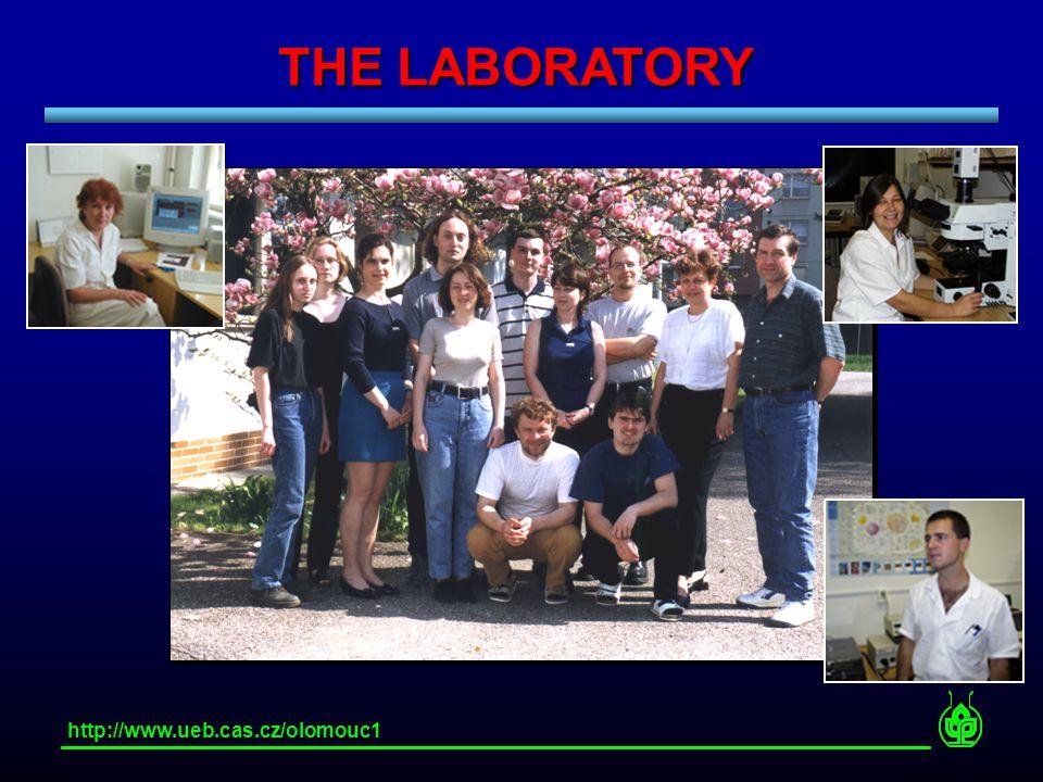 THE LABORATORY http://www.ueb.cas.cz/olomouc1