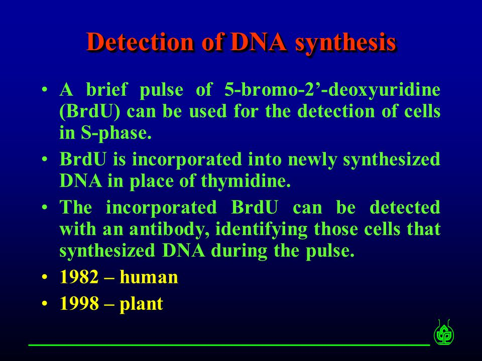 Detection of incorporated BrdU 1 2 3 1) Partial denaturation of DNA (heat, acid, enzyme-DNase I) 2) Immunocytochemical detection of incorporated BrdU (1 step or 2 step procedure) 3) Staining of DNA with fluorescent dye (e.g.