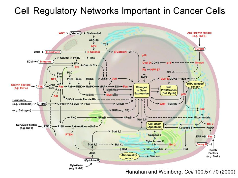 Cell Regulatory Networks Important in Cancer Cells Hanahan and Weinberg, Cell 144:646 (2011)