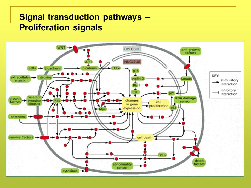 Signal transduction pathways – Proliferation signals