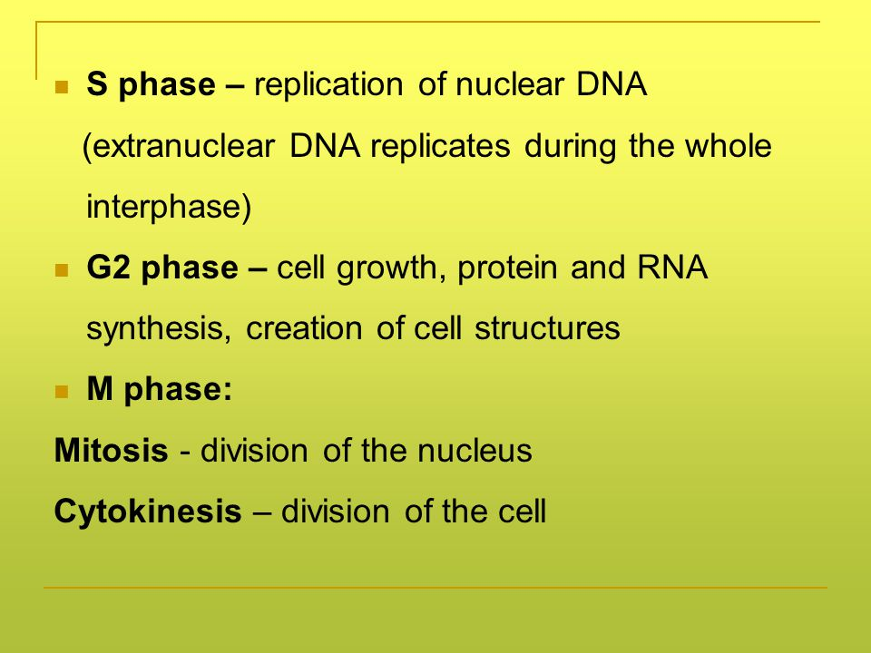 Importance of apoptosis in ontogenesis
