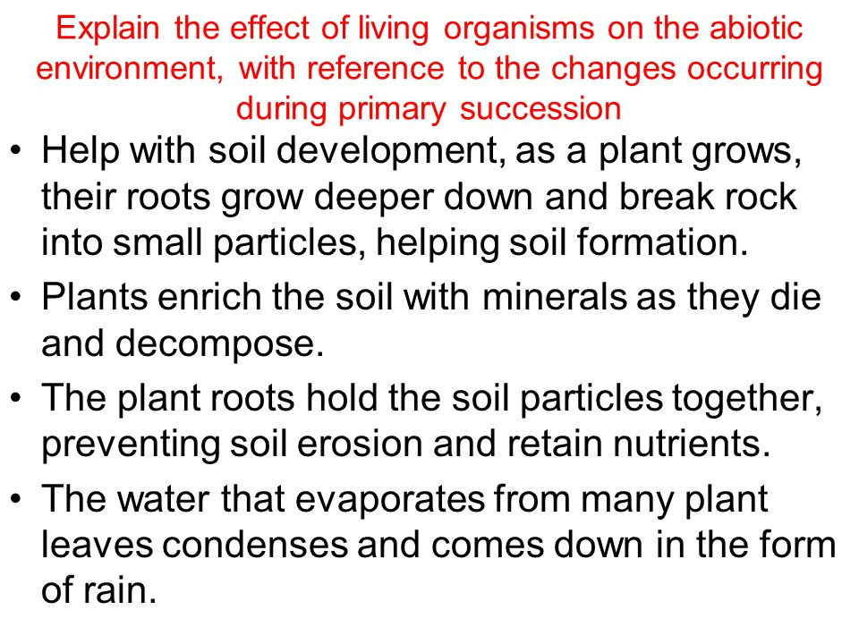 Explain the effect of living organisms on the abiotic environment, with reference to the changes occurring during primary succession Help with soil development, as a plant grows, their roots grow deeper down and break rock into small particles, helping soil formation.