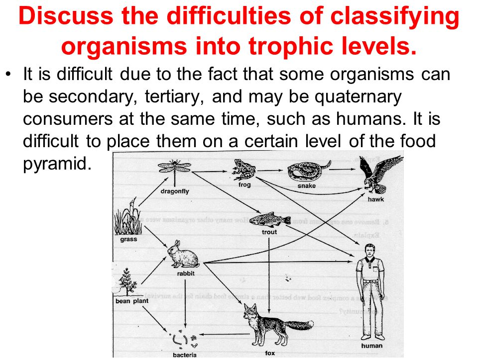 Discuss the difficulties of classifying organisms into trophic levels.