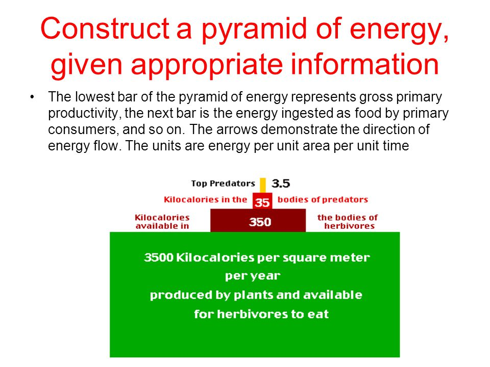 Construct a pyramid of energy, given appropriate information The lowest bar of the pyramid of energy represents gross primary productivity, the next bar is the energy ingested as food by primary consumers, and so on.
