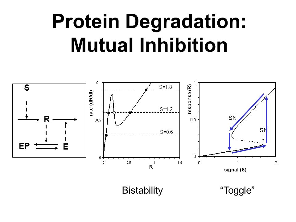 R S EP E R rate (dR/dt) response (R) signal (S) S=0.6 S=1.2 S=1.8 SN Protein Degradation: Mutual Inhibition Toggle Bistability