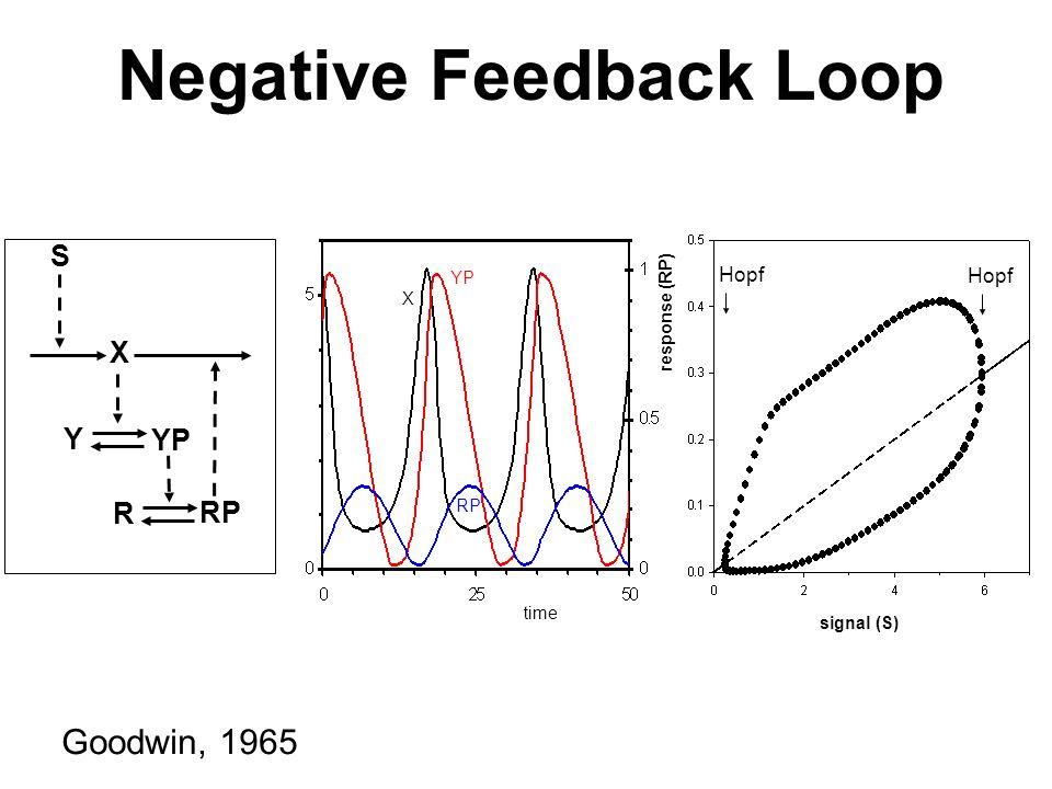 S X Y YP R RP time X YP RP response (RP) signal (S) Hopf Negative Feedback Loop Goodwin, 1965