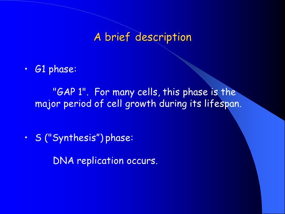 A brief description G1 phase: GAP 1 .