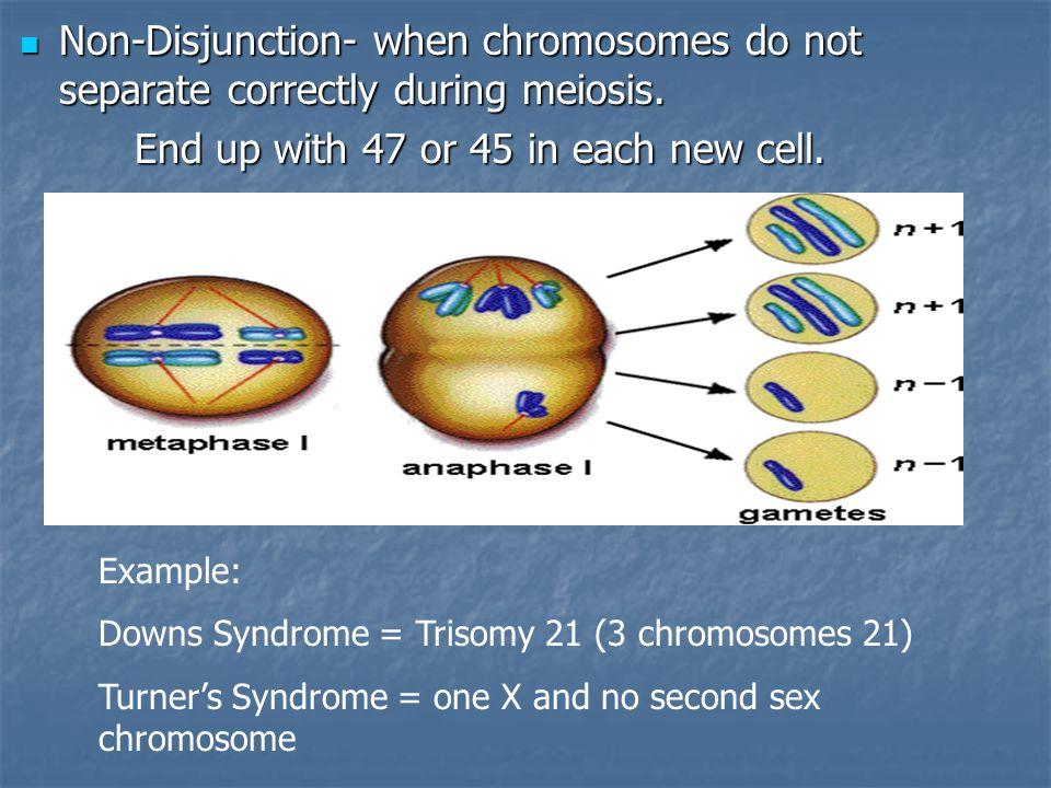 Differences between Mitosis and Meiosis MitosisMeiosis IPMATIPMAT I & PMAT II DiploidHaploid SomateGamete 2 cells4 cells