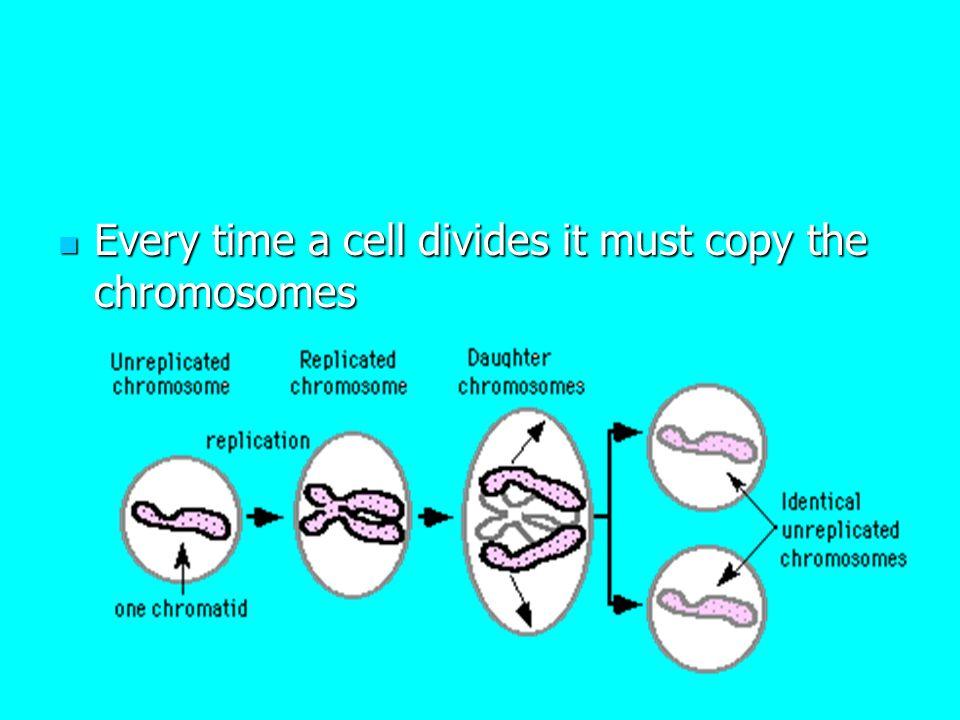 Karyotype Human chromosome number: 46 Karyotype – order of chromosomes from tallest to smallest.