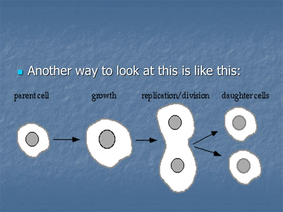 Goal of Mitosis is to allow for growth is to allow for growth maintain tissues maintain tissues Baby Grow to adult